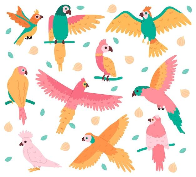 Perroquets Tropicaux. Oiseaux Colorés De La Jungle, Cacatoès Mignon, Jaco Et Perruche Vecteur Premium