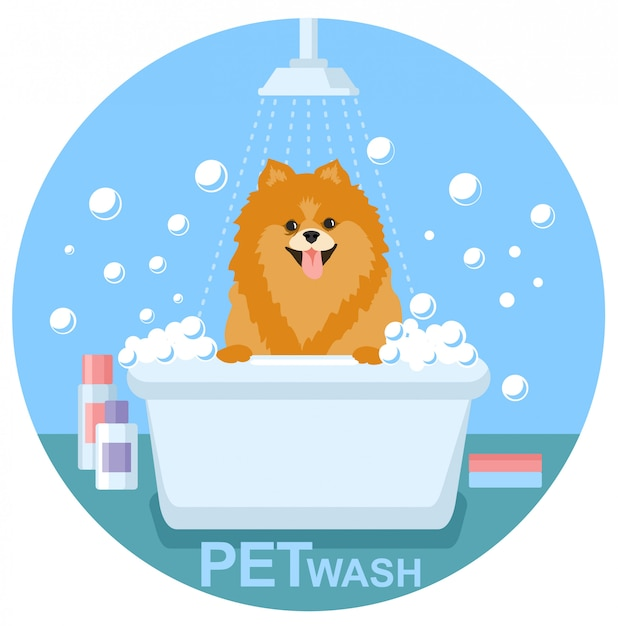 Pet wash. lave de chien, solution de santé de compagnie Vecteur Premium