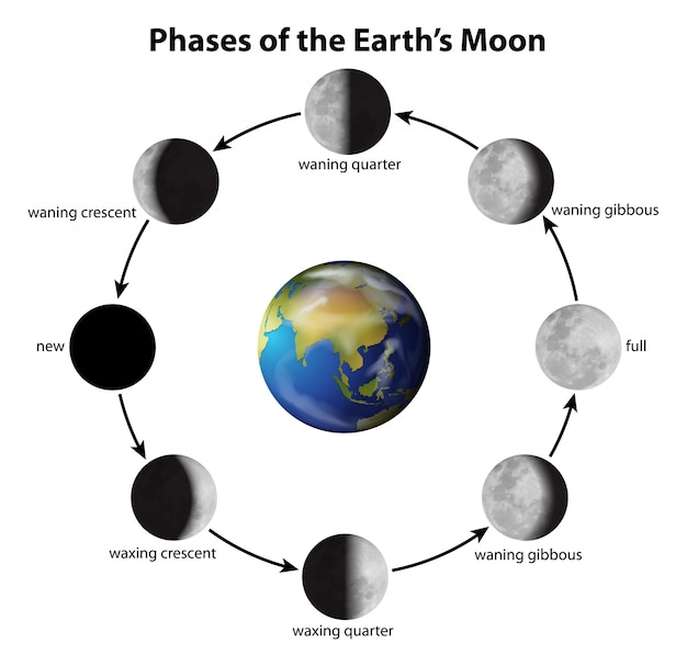 Les phases de la lune Vecteur gratuit
