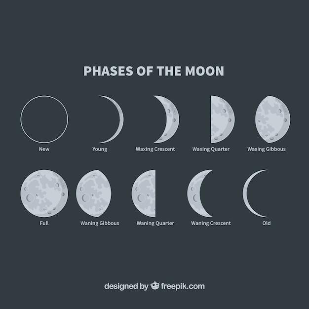 Phases De La Lune Vecteur Premium