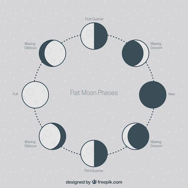 Phases plates de la lune Vecteur gratuit