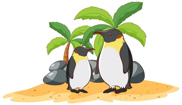 Pingouins Sur Blanc Vecteur gratuit