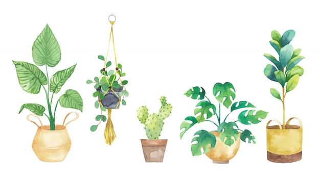 Placez Les Plantes D'intérieur Dans Des Pots Peints à L'aquarelle. Ensemble De Plantes En Pot. Illustration Vectorielle Vecteur Premium