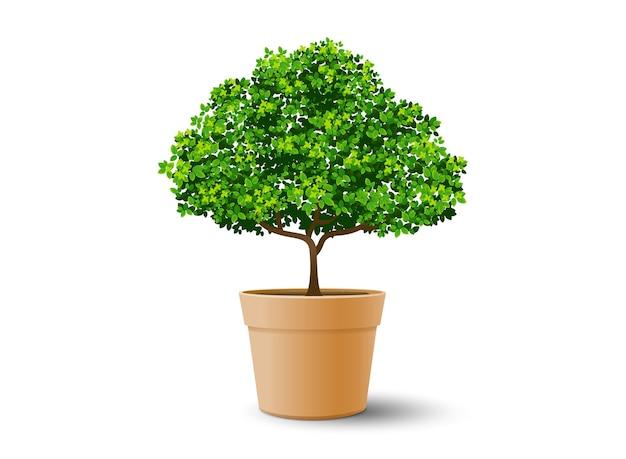 Plant d'arbre dans le pot Vecteur Premium