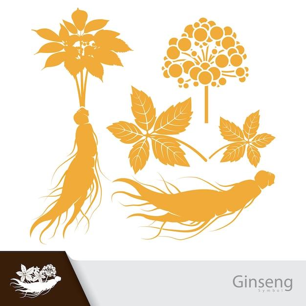 Plante De Ginseng Vecteur Premium