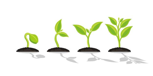 Plante De Jardinage De Semis Vecteur Premium