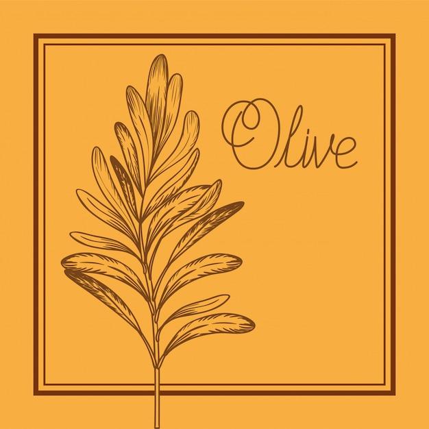 Plante d'olive dessiné cuisine italienne Vecteur Premium