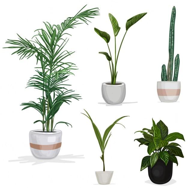 Plantes De La Chambre Vecteur gratuit