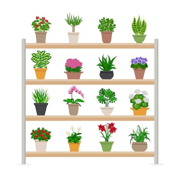 Plantes d'intérieur sur les étagères illustration Vecteur gratuit