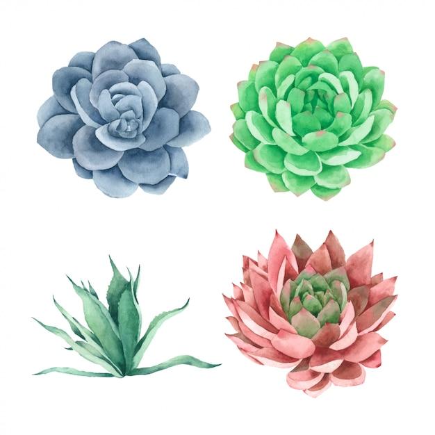 Plantes à la main de cactus succulentes peintes dans une collection d'aquarelles Vecteur Premium