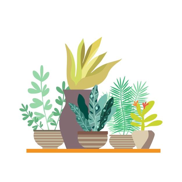 Plantes de la maison de la maison dans des pots Vecteur Premium