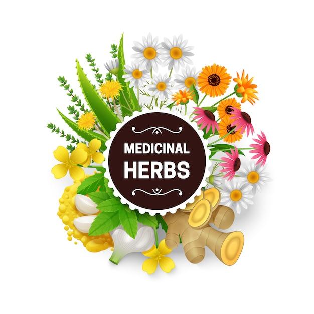 Plantes médicinales naturelles curatives Vecteur gratuit