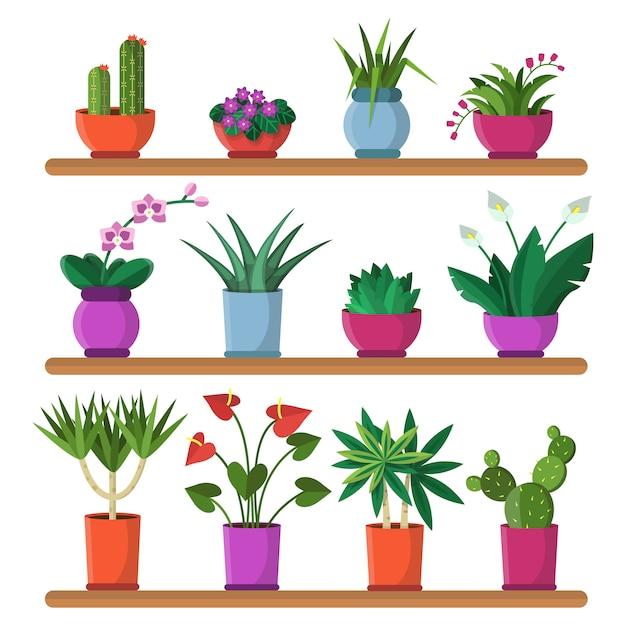 Plantes en pots sur les étagères Vecteur Premium