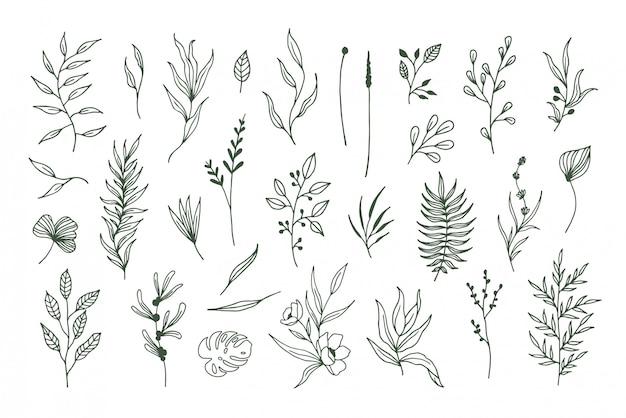 Plantes Vectorielles Dessinées à La Main, éléments Floraux Et Feuilles Vecteur Premium