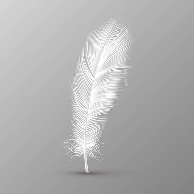Plume Réaliste. Ailes D'oiseaux Doux Blanc Unique Duvet Lisse Sur L'image Vectorielle Fond Transparent Vecteur Premium
