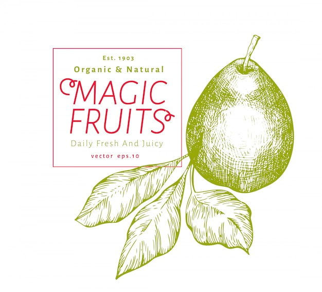 Poire aux feuilles. illustration de fruits jardin vecteur dessiné à la main. fruit de style gravé. illustration botanique vintage. Vecteur Premium