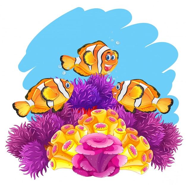 Poisson couronne jouant dans le récif de corail Vecteur Premium