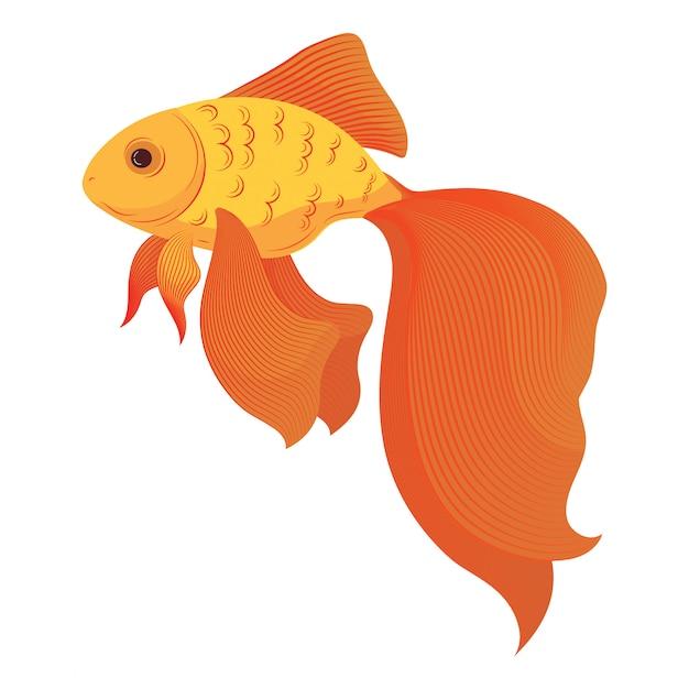 Un Poisson Rouge De Dessin Animé. Poisson Rouge Stylisé. Poissons D'aquarium. Illusration. Vecteur Premium