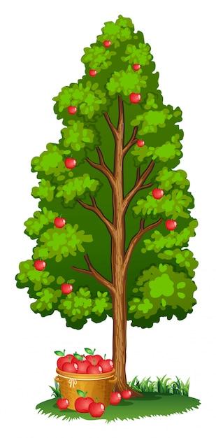 Pommiers rouges et pommes dans un panier Vecteur gratuit