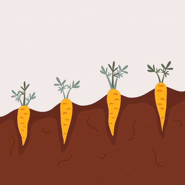 Potager Bio Aux Légumes Racines. Vecteur Premium
