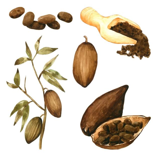 Poudre De Graines De Cacao Et Dessin à La Main De Feuilles à L'aquarelle Vecteur Premium
