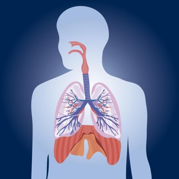 Poumons physiologie illustration Vecteur gratuit