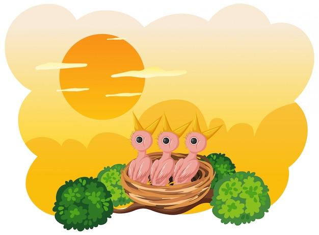 Poussins Et Sa Mère Oiseau Dans La Nature Vecteur Premium