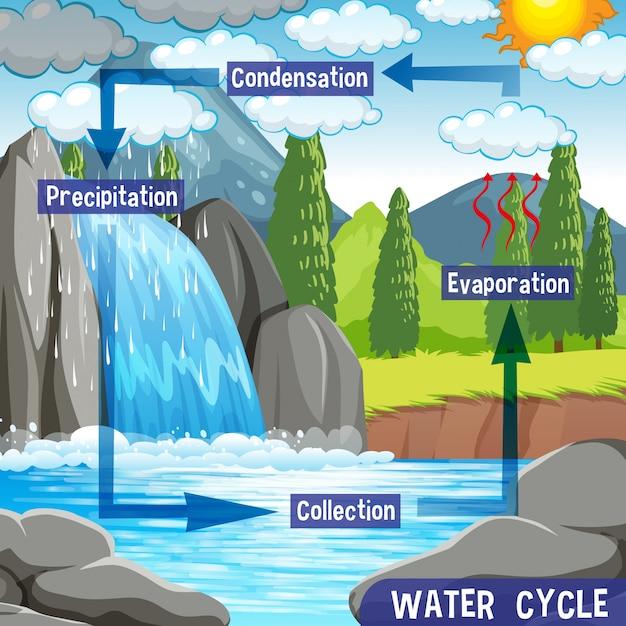 Processus du cycle de l'eau sur terre - scientifique Vecteur gratuit