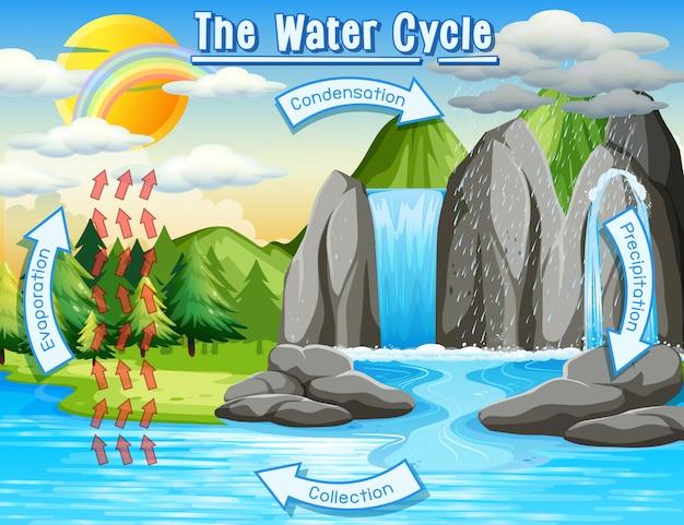 Processus du cycle de l'eau sur terre Vecteur gratuit