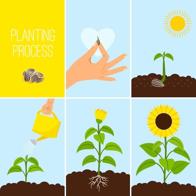Processus de plantation de fleurs Vecteur Premium