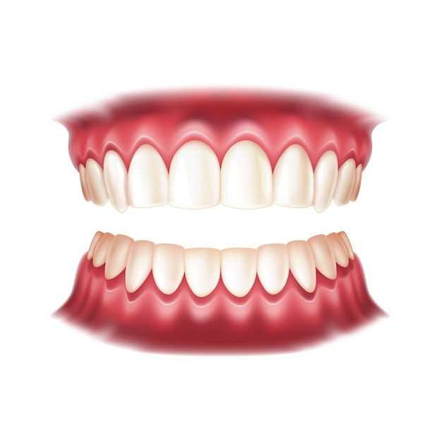 Prothèses Réalistes Pour La Conception De Dentisterie Et D'orthodontie Vecteur Premium