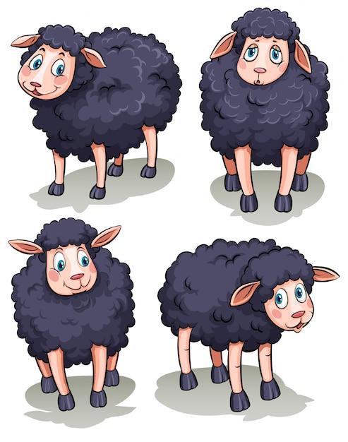 Quatre moutons Vecteur gratuit