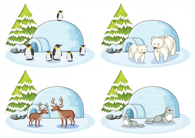 Quatre Scènes D'hiver Avec Différents Animaux Vecteur gratuit