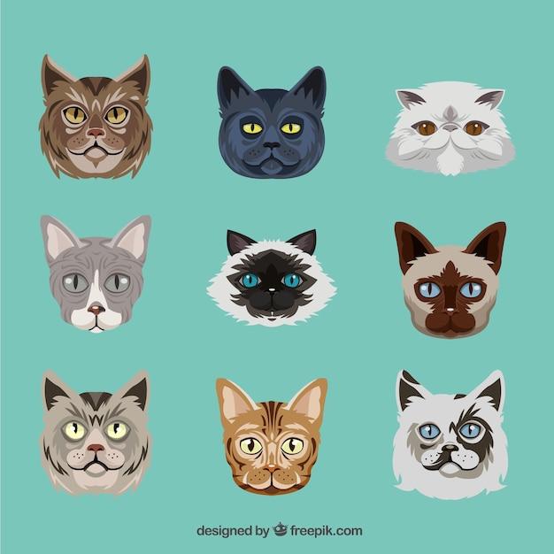 Races de chat Vecteur gratuit