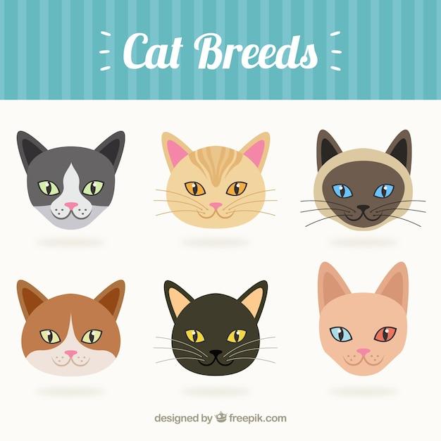 Races de chat collection t l charger des vecteurs gratuitement - Telecharger image de chat gratuit ...