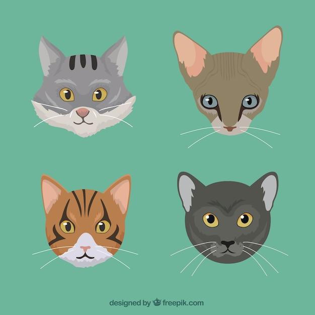 Races de chat pack t l charger des vecteurs gratuitement - Telecharger image de chat gratuit ...