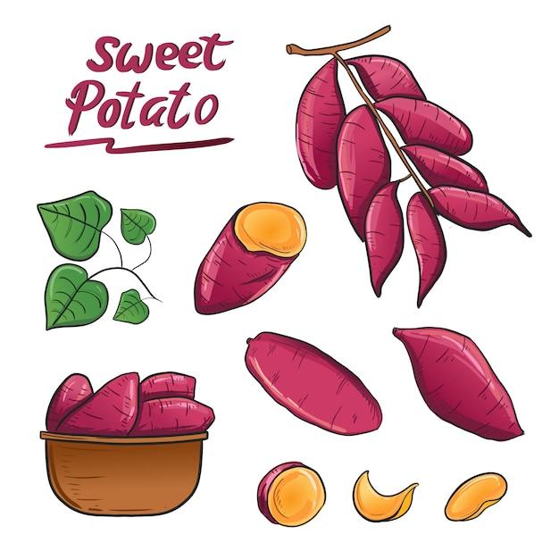 Racine de patate douce plante illustration vecteur dans le panier. Vecteur Premium