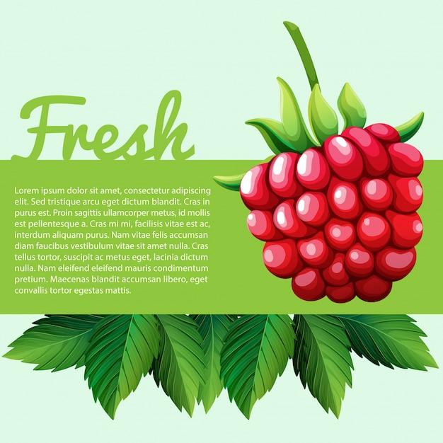 Rasberry frais avec du texte Vecteur Premium