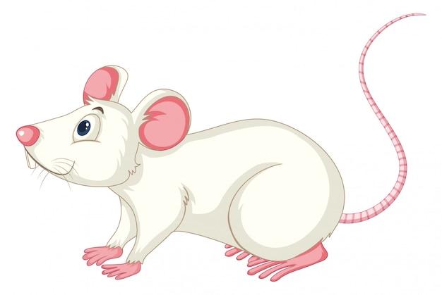 Rat Blanc Sur Blanc Vecteur Premium