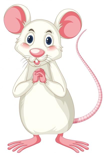 Rat Blanc Vecteur Premium