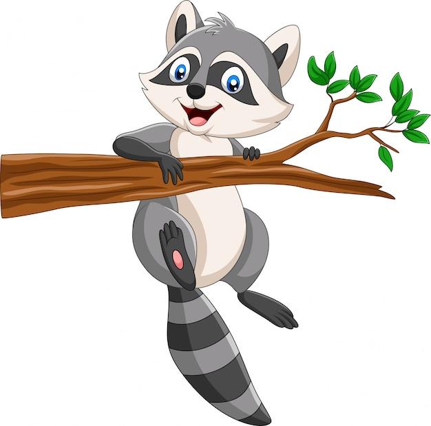 Raton laveur sur une branche d'arbre Vecteur Premium