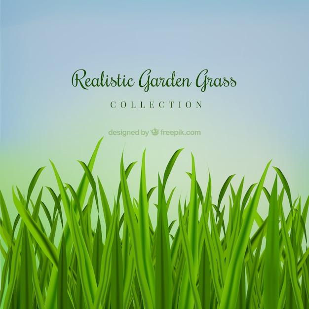 r aliste herbe jardin t l charger des vecteurs gratuitement. Black Bedroom Furniture Sets. Home Design Ideas