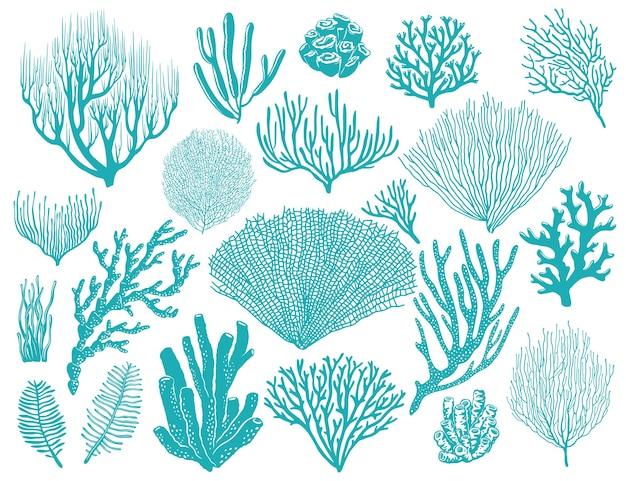 Récif De Corail Ou Plantes Sous-marines D'algues. Vecteur Premium
