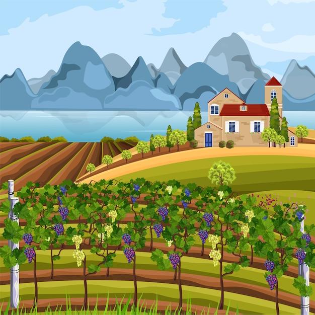 Récolte de vignes et de montagnes Vecteur Premium
