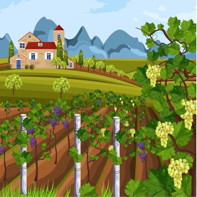 Récolte de vignoble Vecteur Premium