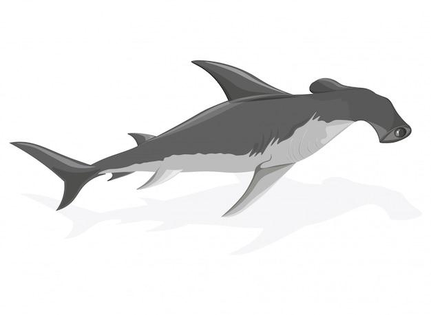 Requin-marteau Vecteur Premium