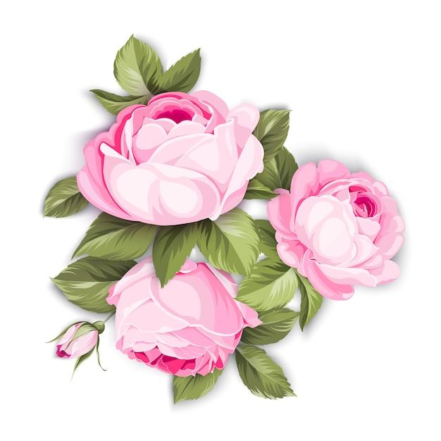 La rose en fleurs. Vecteur Premium