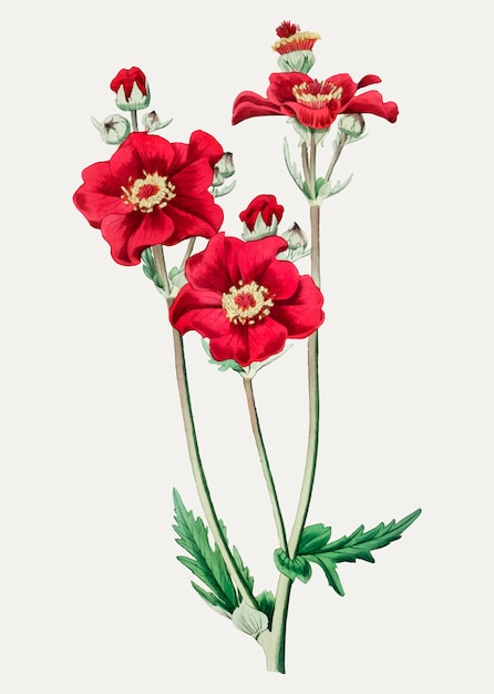 Rose Grecque Vecteur gratuit