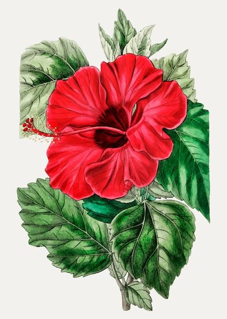 Rose mauve Vecteur gratuit