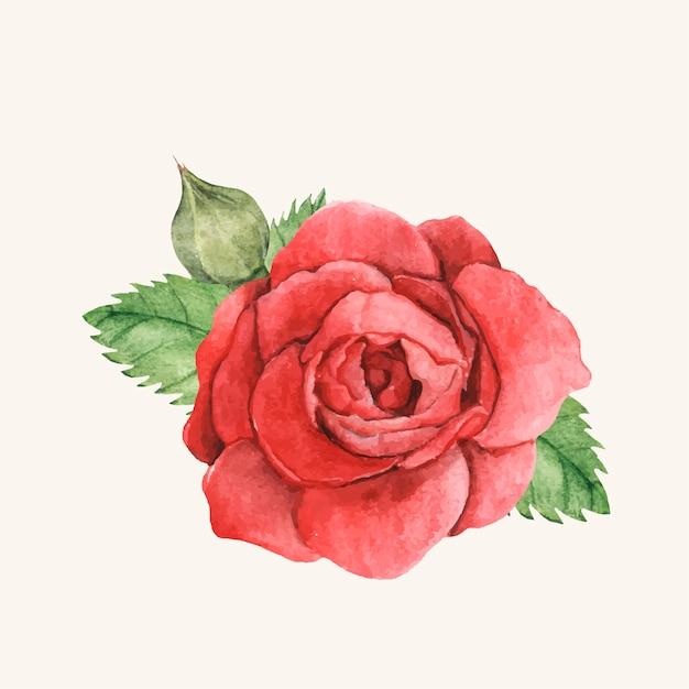 Rose rouge dessiné à la main isolé Vecteur gratuit